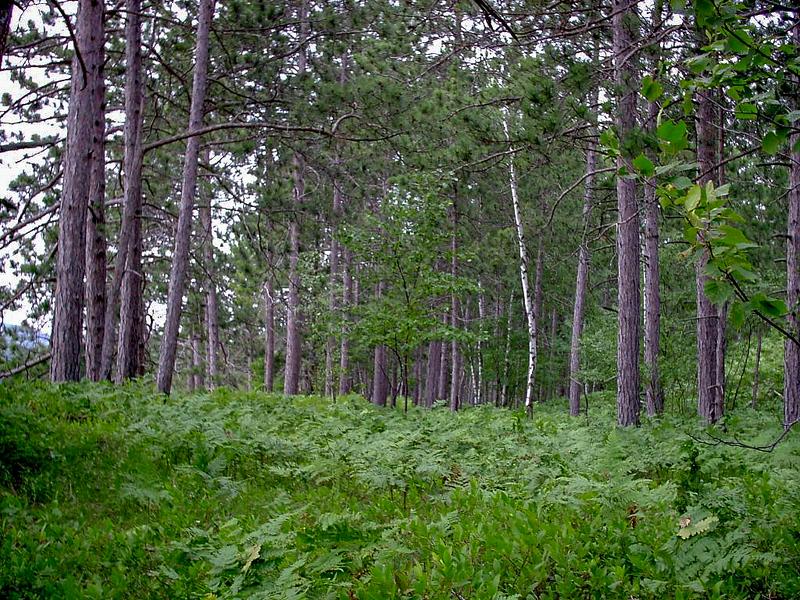 Day 3 - Woods Along Beaver Lake