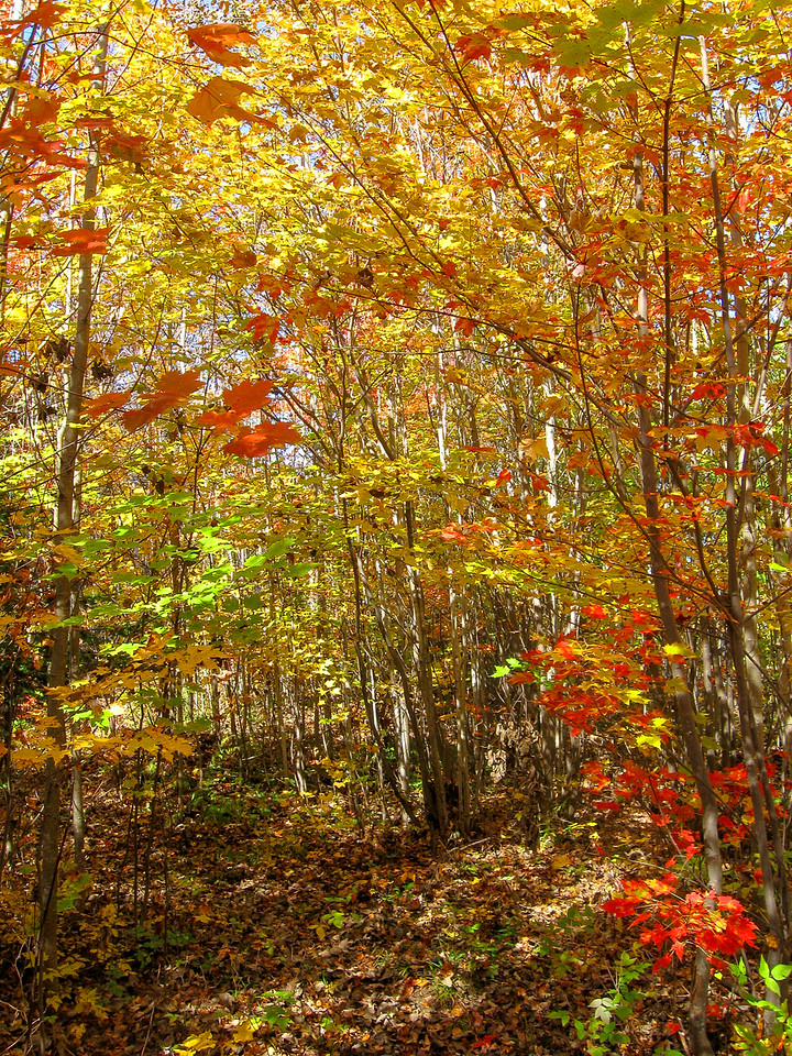 My welcome back into the deciduous forest was almost blinding!