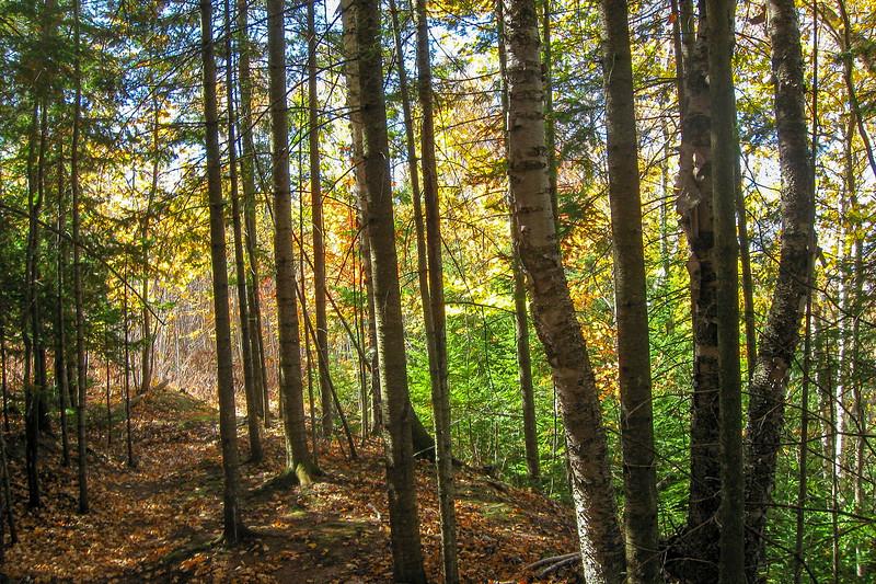 Finlayson Nature Trail