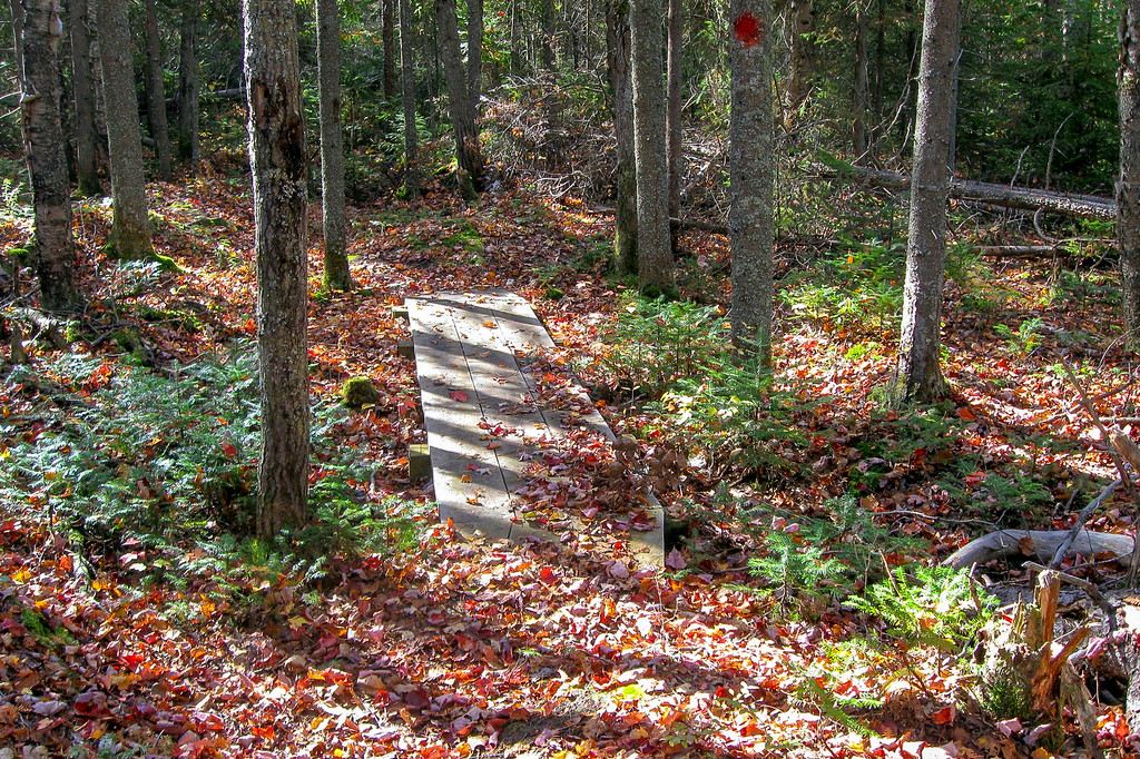 A nice secondary bit of color covers the forest floor...