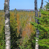 As you can see the trail gets nowhere near the lake. the far line of pines marks the lakeshore...the hills beyond are of Gros Cap, Ontario...