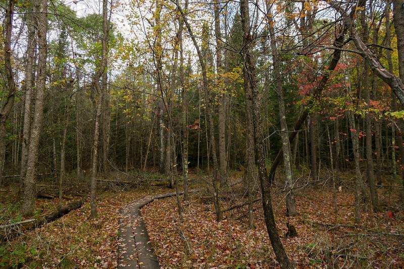 Oberholtzer Trail