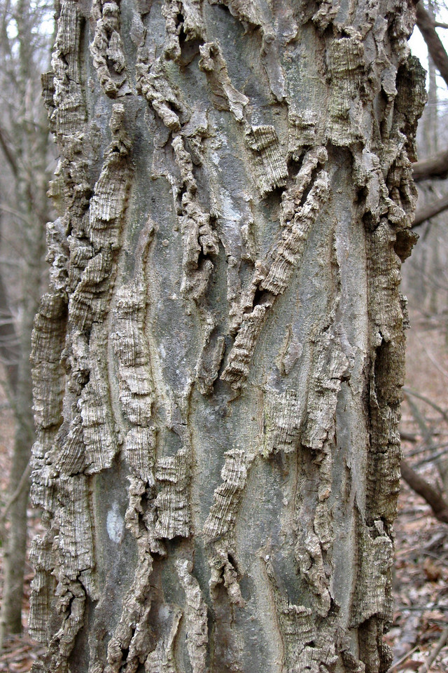 This tree is a mystery to me...very unique bark...