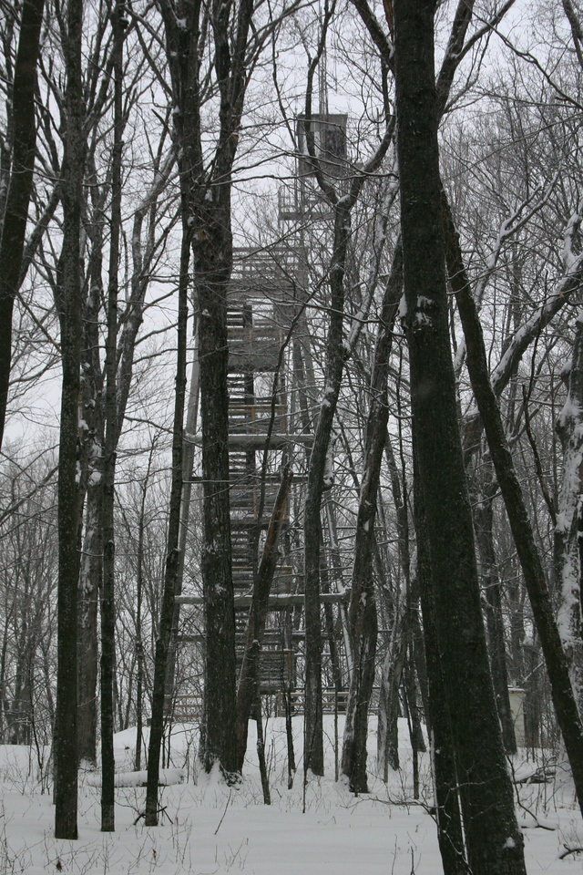 First glimpse of the observation tower through the trees...
