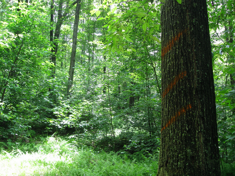 Highpoint Trail