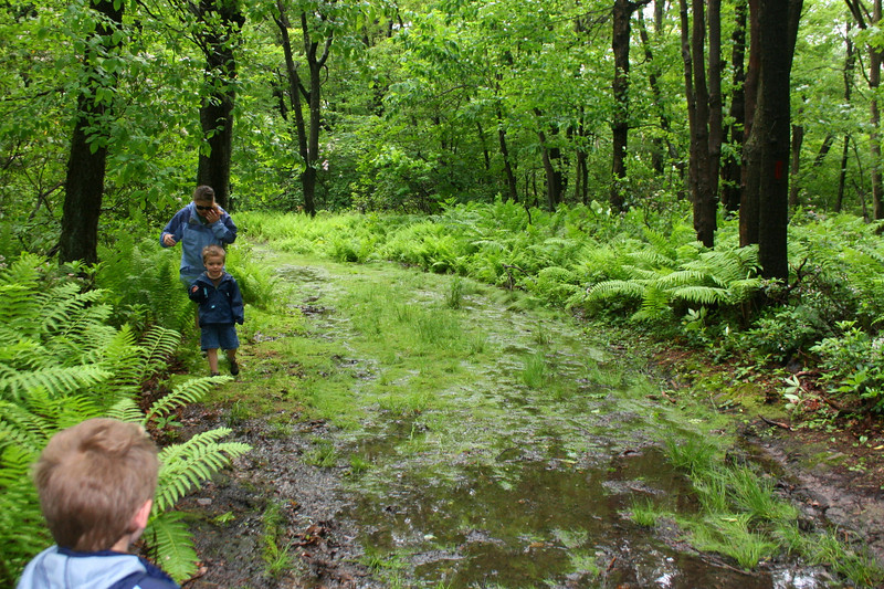 Navigating one of the more damp sections of trail.  Being a ridgetop hike, the trail was not well-drained...