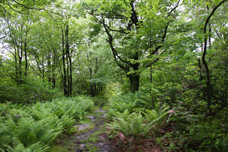 Another trail scene from along the ridge...