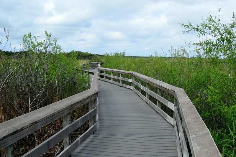The second half of the trail loops around through the slough on an elevated boardwalk...