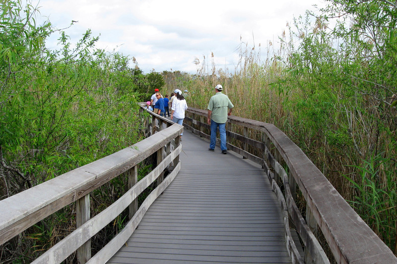Much of the first half of the boardwalk is surrounded by thick Mangrove groves...