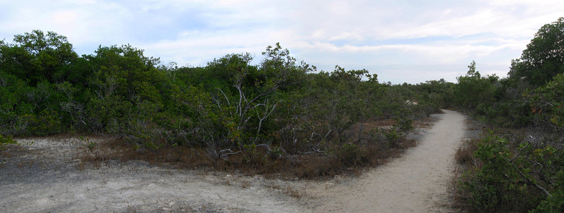 Soon, the trail opens up into a very sandy area bordered by low shrubs...