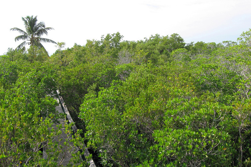 Instead, this was what we saw...very little ocean and a whole lot of mangroves...