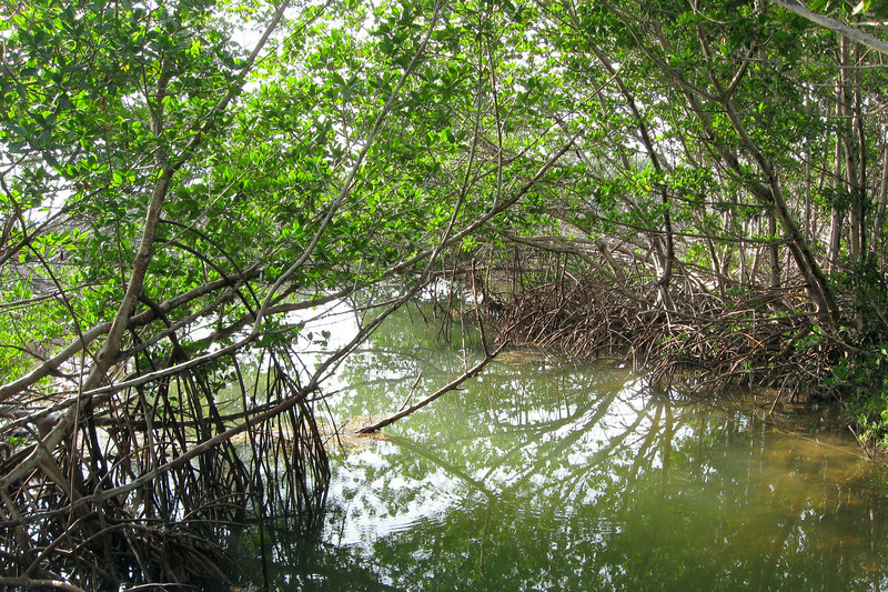 The sun filtering through the leaves, the murky water rippling through the mangroves...this was a really cool spot...