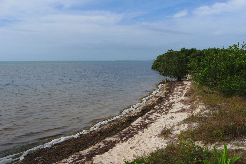 Large, sandy beaches aren't actually all that naturally common in the Keys...shorelines are typically overgrown and frequently quite rocky...