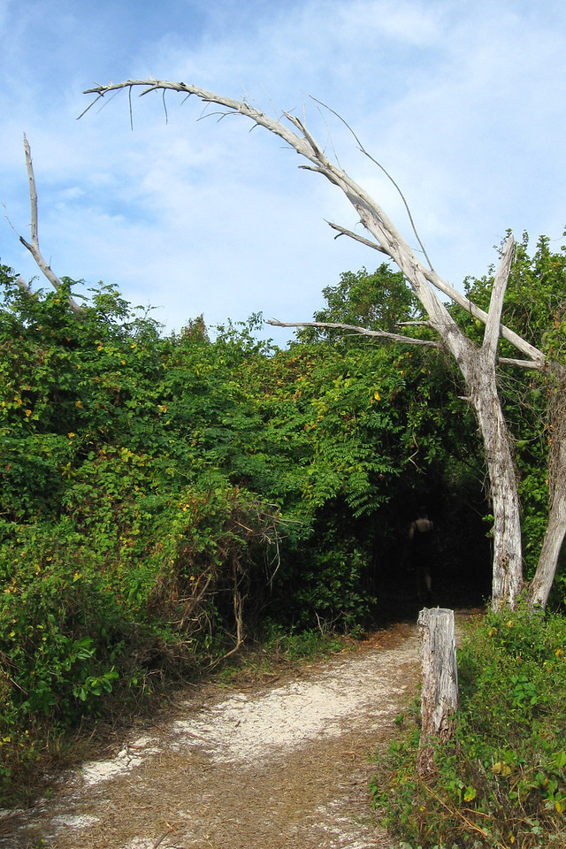 An old, dead tree makes for a foreboding entrance back into the mangroves...
