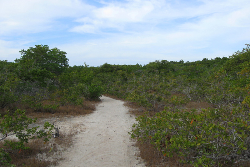 Golden Orb Trail