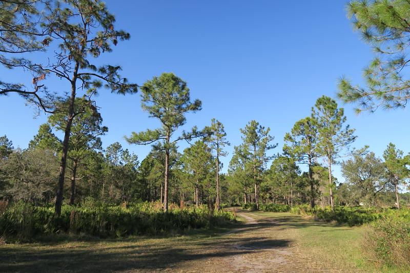 Hickory Bluff Preserve Trailhead