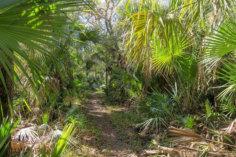 Kolokee Trail
