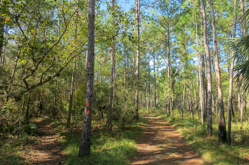 Florida Trail