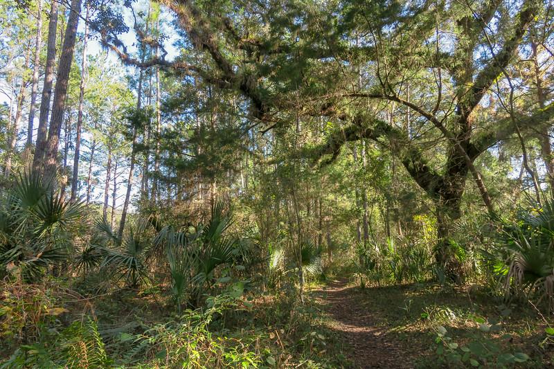 Florida Trail