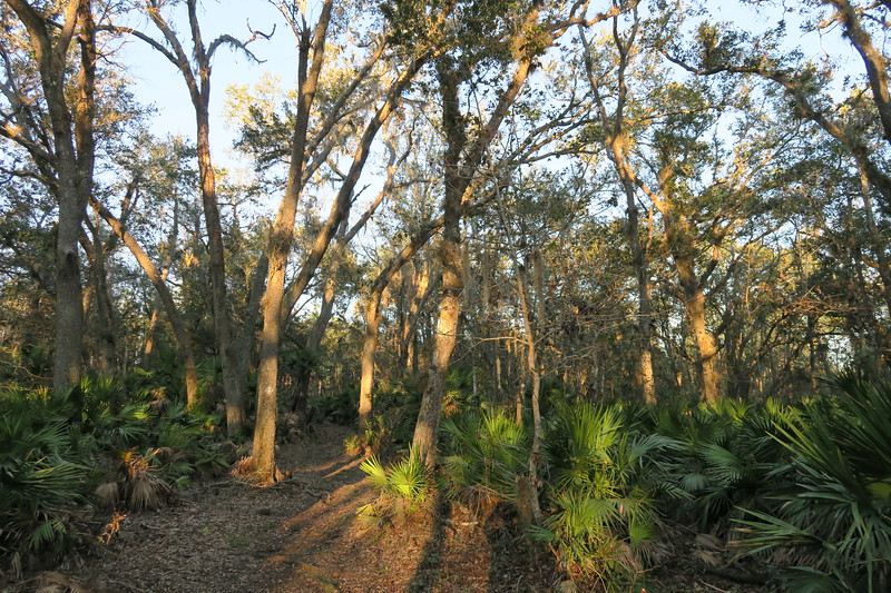 Kratzert Tract Loop Trail