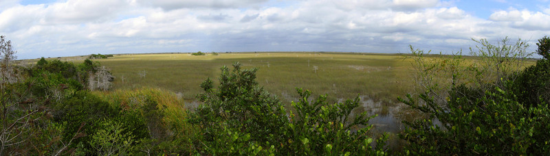 The overlook also gives some restricted views across the sprawling freshwater prairie to the north and east...