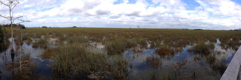 This, for myself at least, is imagined when I think of the Everglades...a expansive 'river of grass' stretching to the horizon...