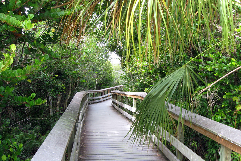 The boardwalk starts out passing through a dense hardwood hammock, a forest type that covers the scattered 'upland' areas of the Everglades...