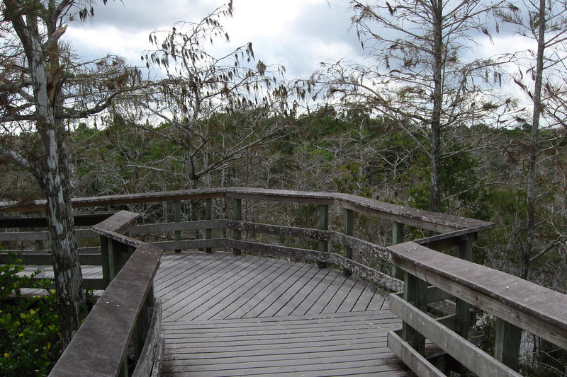 Halfway around is the observation deck which gives a good look down into the surrounding cypress swamp...just don't lean on the railings! :p