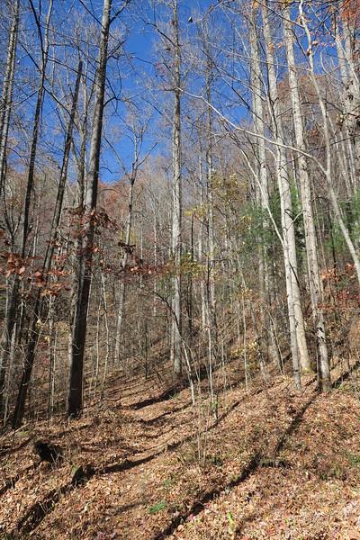 James Edmonds Trail -- 2,740'