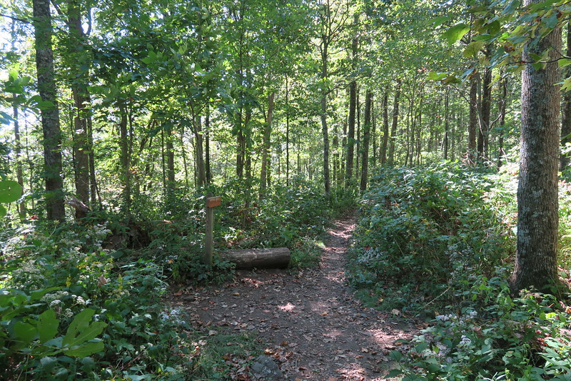 Appalachian-Freeman Trail Junction