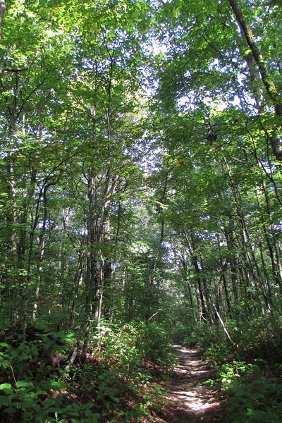 Bartram Trail