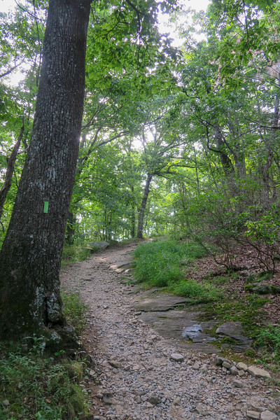 Yonah Mountain Trail -- 2,850'