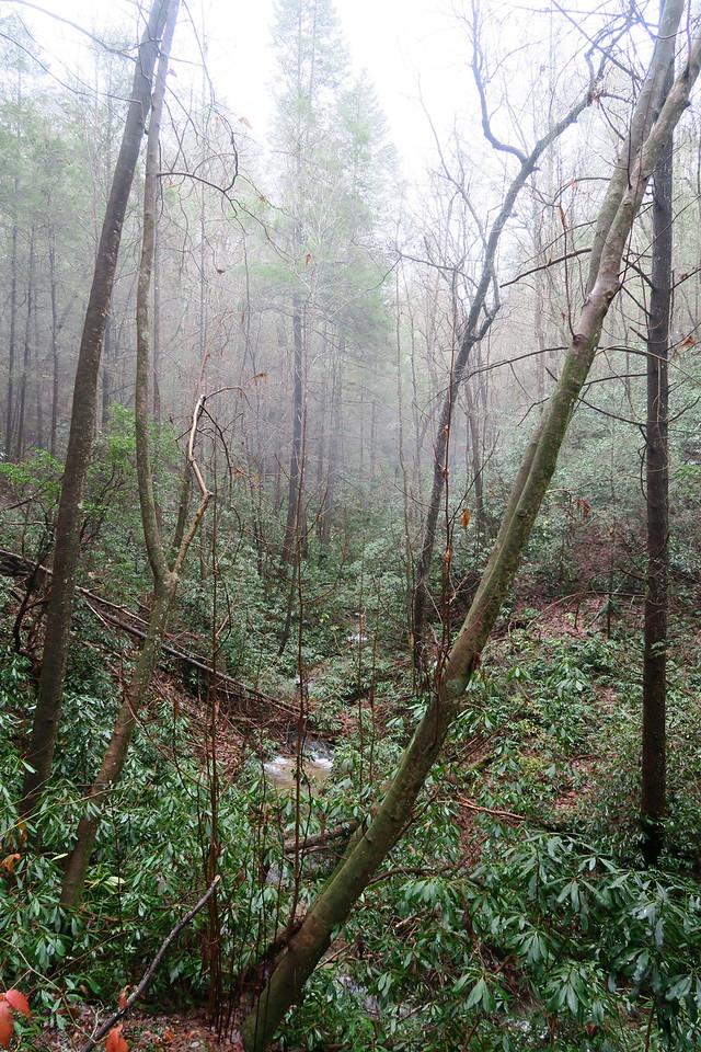 Opossum Creek Falls Trail