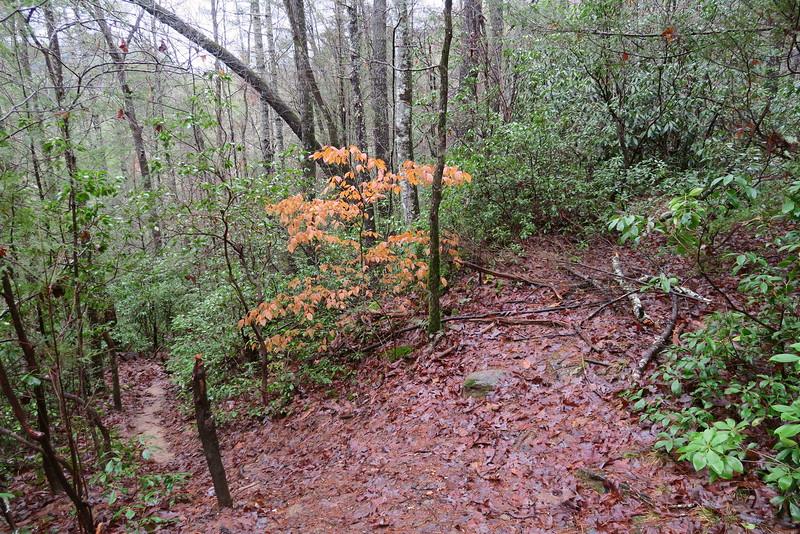 Long Creek Falls Trail