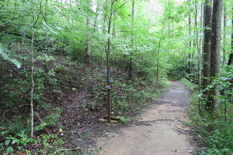 Asbury Trail - Asbury Falls Spur Junction