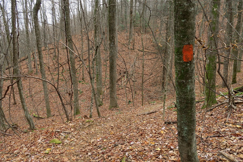 Coldspring Branch Trail -- 3,020'