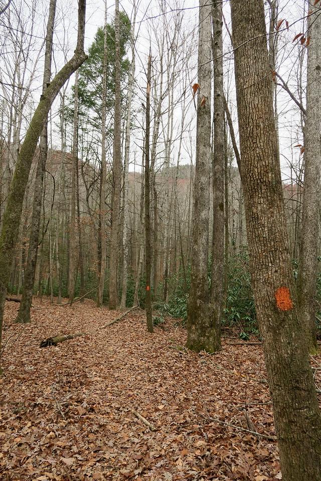 Bill Kimball Trail -- 2,000'