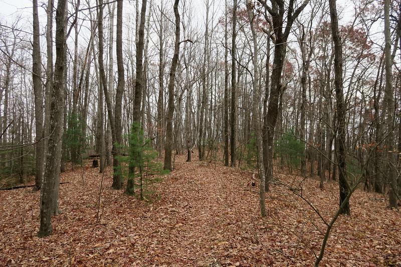 Bill Kimball Trail -- 3,140'