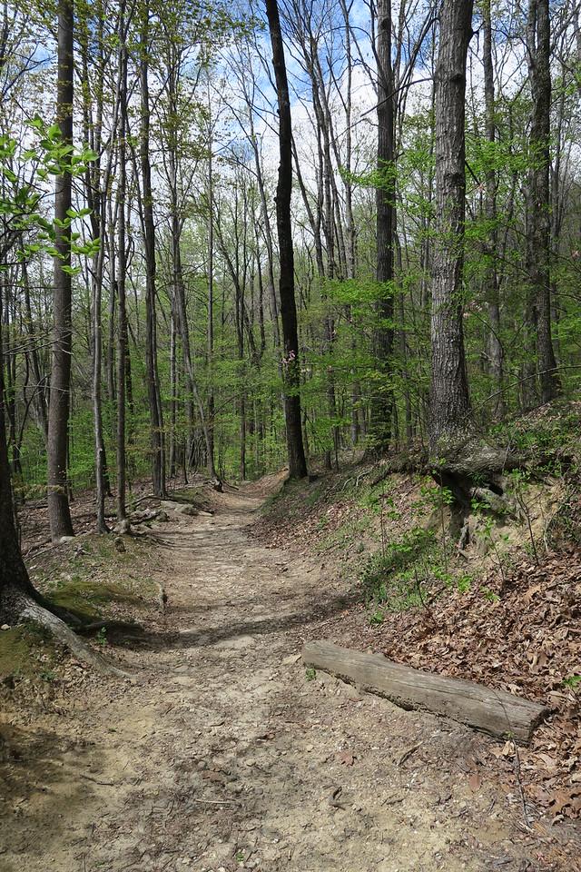 Raven Cliff Falls Trail