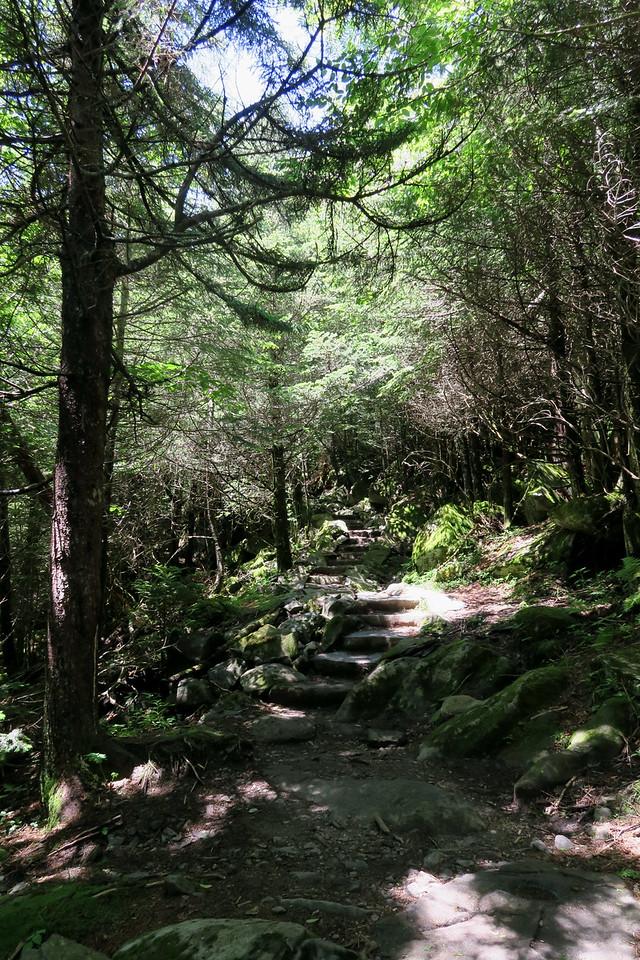 Forney Ridge Trail - 6,000'