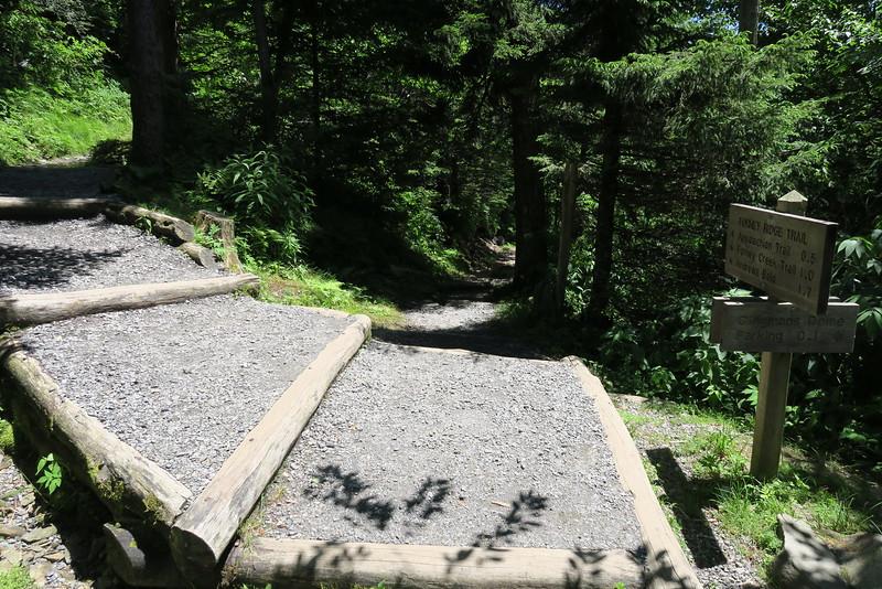 Forney Ridge-Clingman's Dome Parking Lot Trail Junction- 6,180'
