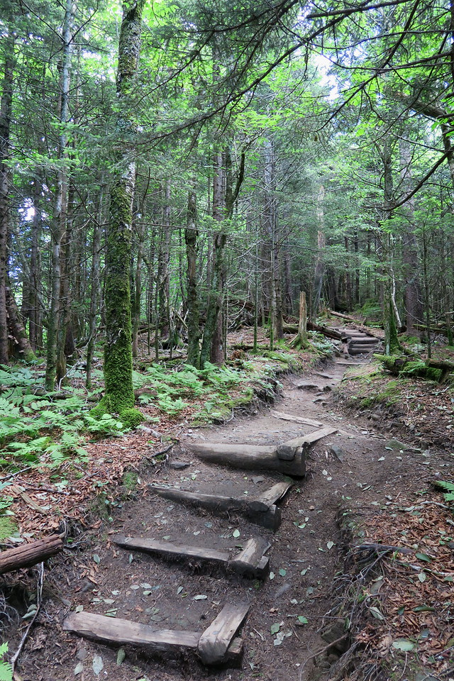 Forney Ridge Trail - 5,780'