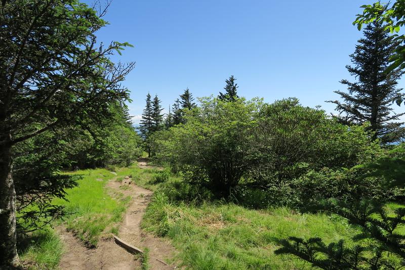 Forney Ridge Trail - 5,800'