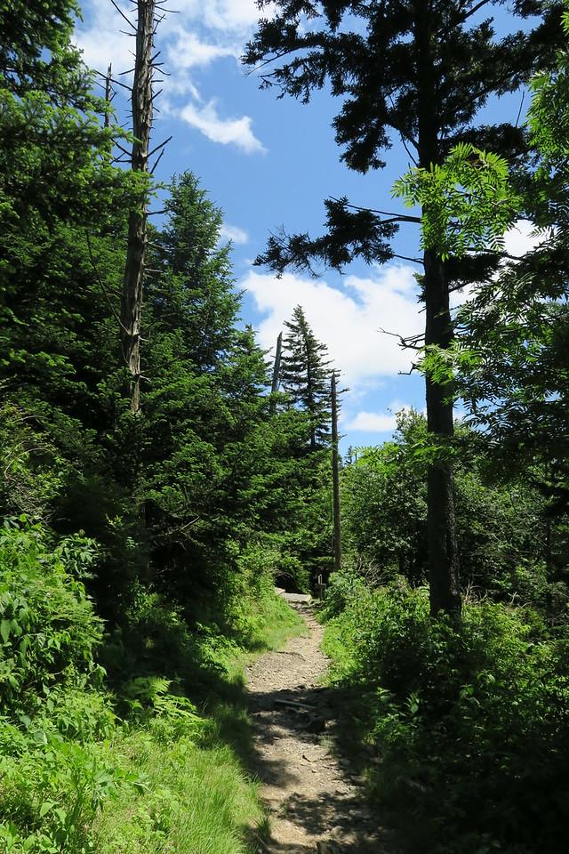 Forney Ridge Trail - 6,200'