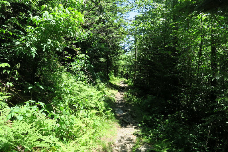 Forney Ridge Trail - 6,300'