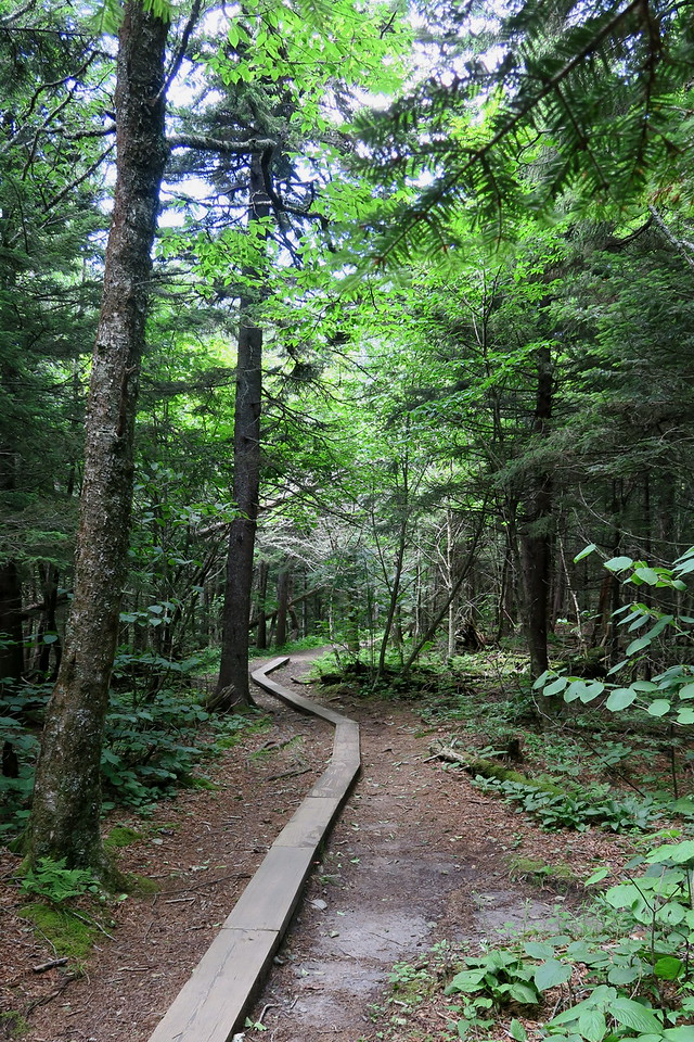 Forney Ridge Trail - 5,770'