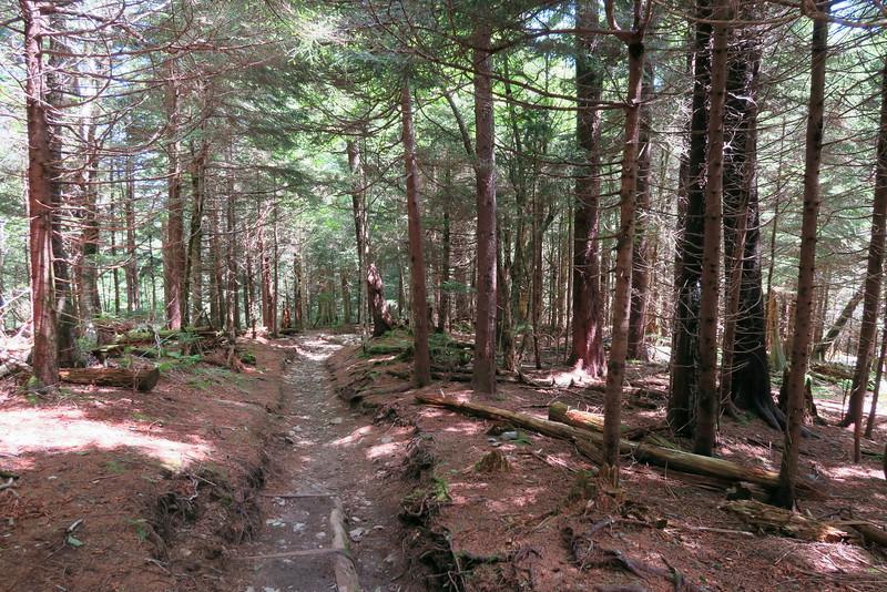 Forney Ridge Trail - 5,850'