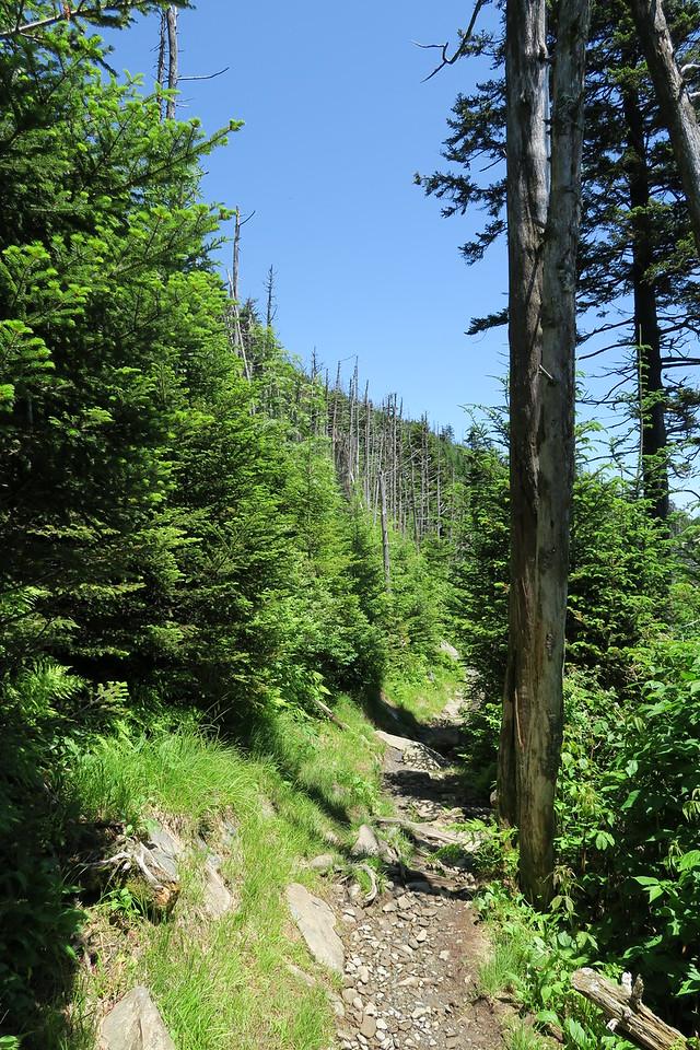 Forney Ridge Trail - 6,480'