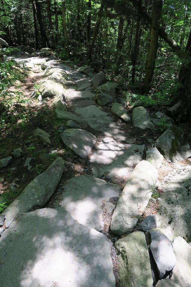 Forney Ridge Trail - 6,150'