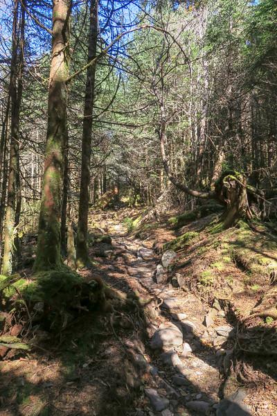 Jumpoff Spur Trail - 6,100'